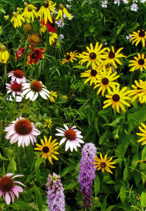 Midwest Perennial Mixture