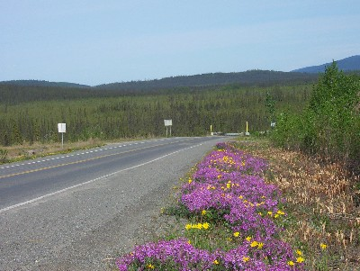 flowers by highway